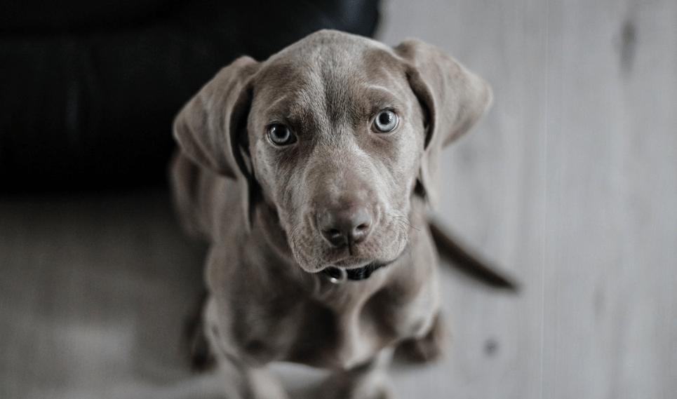 little dog image