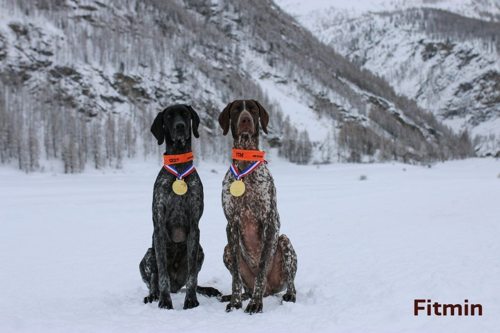 couple of dogs winners in the IFSS World Championship Snowland 2019