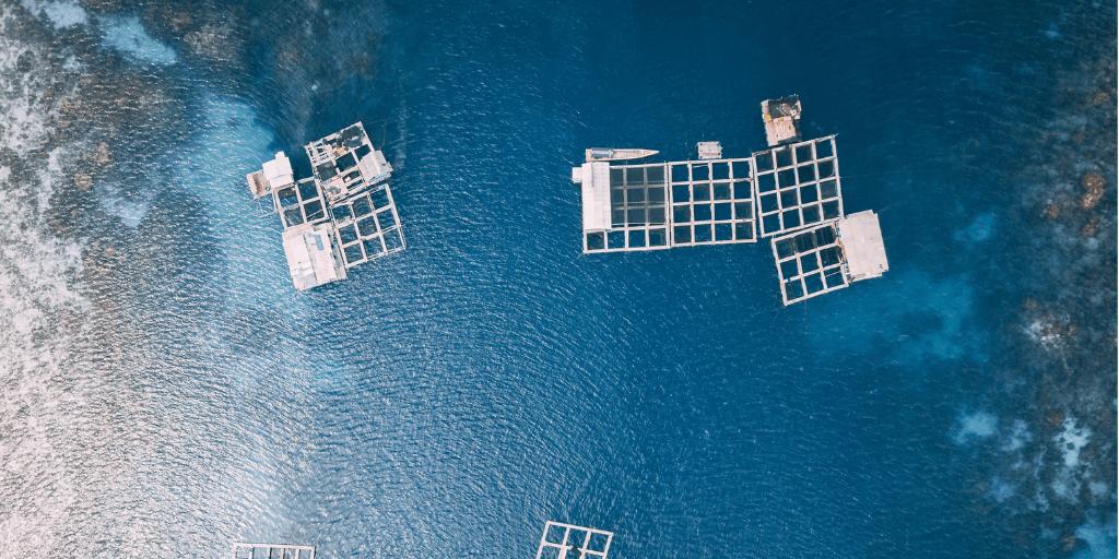 granjas marinas para alimentación acuícola