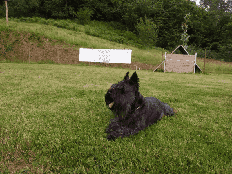 foto de la perrita lona en un césped en la Exposición Nacional Canina de Cantabria