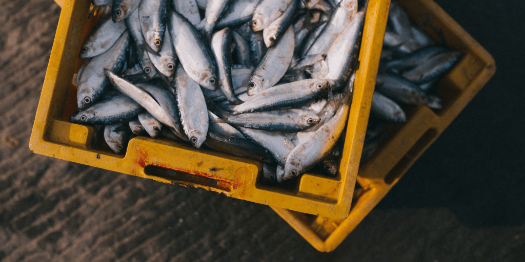 peces alimentados con alimentación acuícola