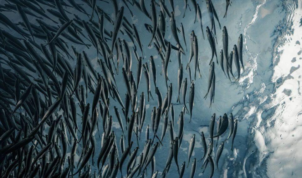 aquaculture projects